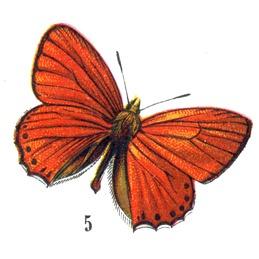 butterflyhallogfairy3