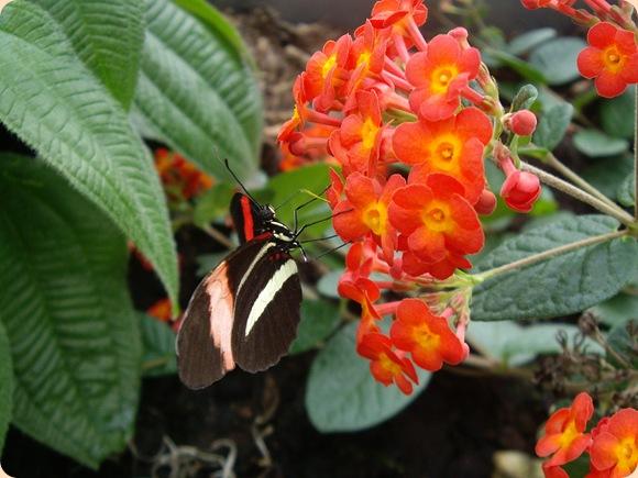 Lille sommerfugl