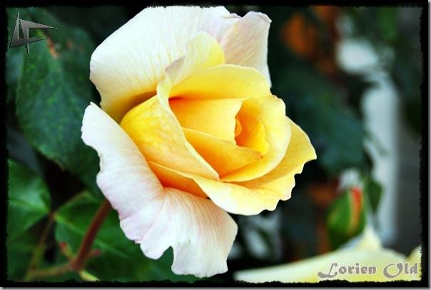 FloresM (6)