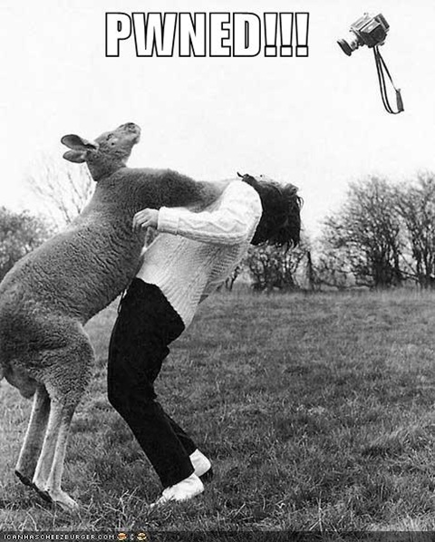 funny-pictures-kangaroo-punch