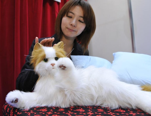 Dream Cat Venus