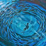 duiker tussen vissen