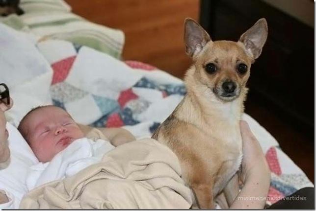 1 - niños con perros misimagenesdivertidas  (2)