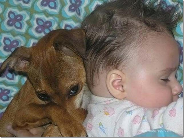 1 - niños con perros misimagenesdivertidas  (18)