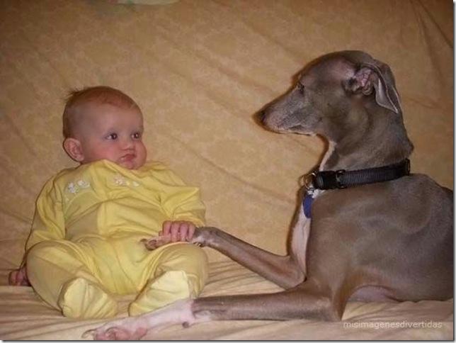 1 - niños con perros misimagenesdivertidas  (22)