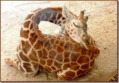 animales mamiferos (27)