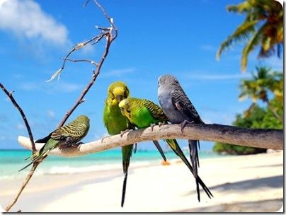 aves divertidas (3)
