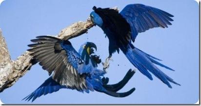 aves divertidas (6)