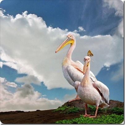aves divertidas (15)