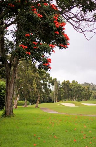 2011-03-05-Kauai-019web