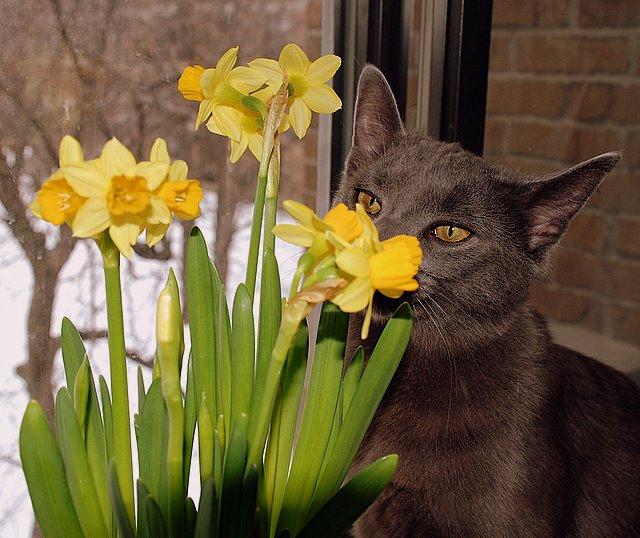vassia the cat merry you
