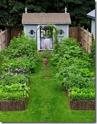 garden vegie patch