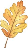 HW Leaf5-710544