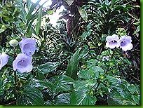 Pousada flores 15 março 2011 008