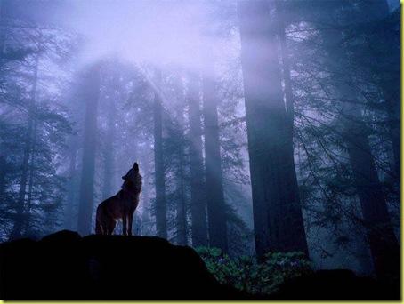 wolfindarkwoods