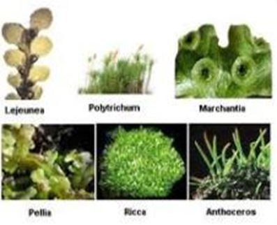 bryophyta-first-land-plants
