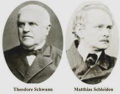 Schleiden-Schwann