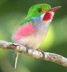 Humming-bird-cuba-Smallest