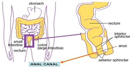 anal-canal