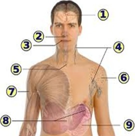 lymphadenopathy1