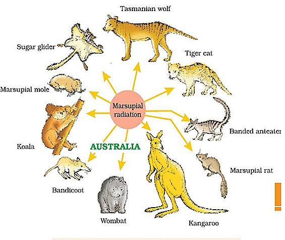 australia-zoo-geography