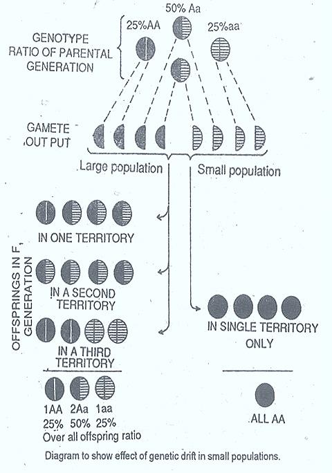 genetic-drift-2