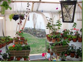Blomster og drivhus mai 09 012