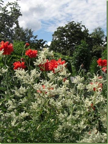 Botanisk have 7 juni 09 003