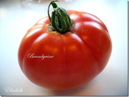 Tomater og edderkopp 001