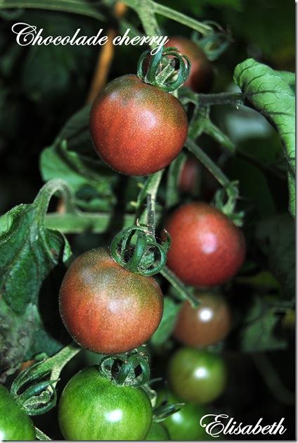 Tomater og edderkopp 020