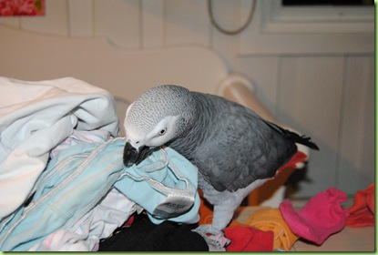 Otto fikser klesvasken 010
