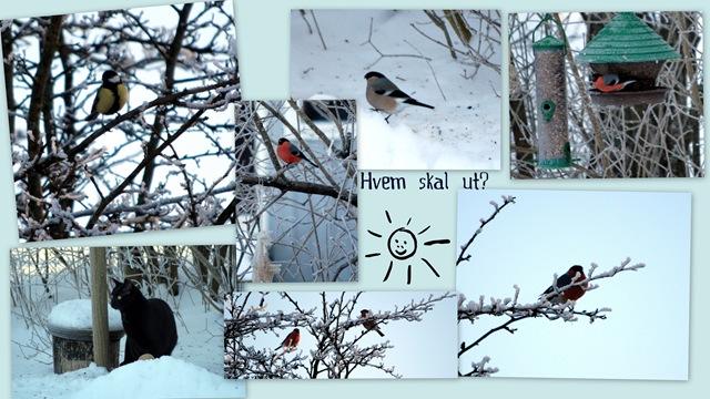 2011-01-20 Januar -12