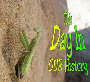 DIH - Mantis