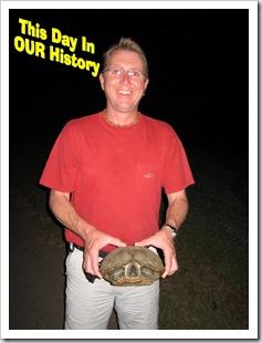 DIH - Turtle