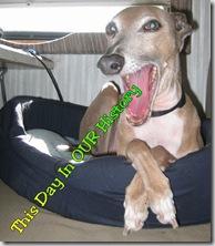 DIH - Dasher Yawns
