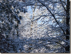 snow, star BOM, dogs 055