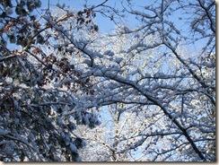 snow, star BOM, dogs 058