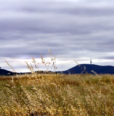 Grassland and Black Mountain