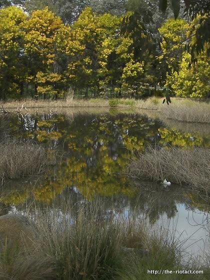 o'connor wetlands