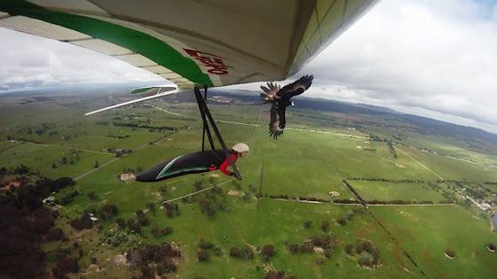 Eagle attack on hang glider
