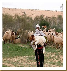 Shepherd_in_Israel