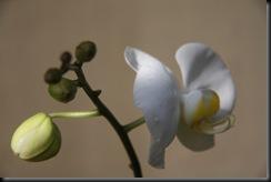 Flora BM 003