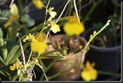 Flora BM 004