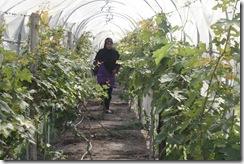 Ladang Anggur Kak CT 13.11.2010 001