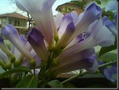 D'laman 21.2.2011 003
