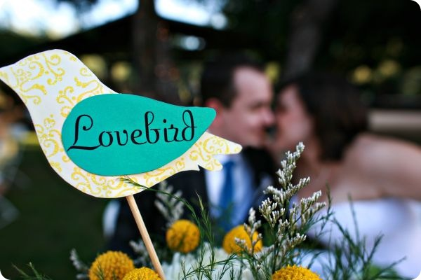lovebird
