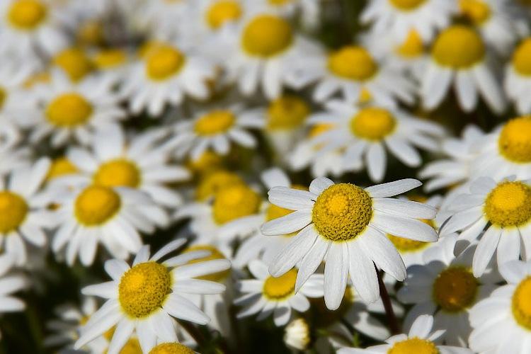 03042010-flor