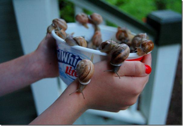 snails3