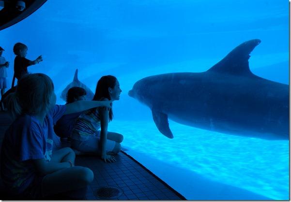 dolphin-6