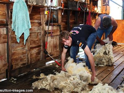 Себастьян Феттель бреет овцу на австралийской ферме в Мельбурне